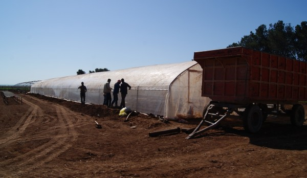 Greenhouse-Project-currently-being-set-up-in-Cizire-will-be-run-by-women-from-18-communes-600x348